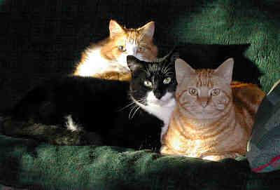 3brothers.jpg