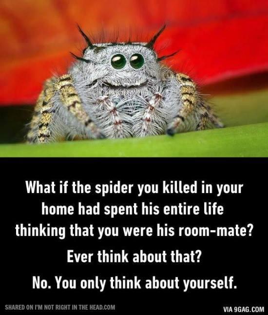 Spider Roomie.jpg