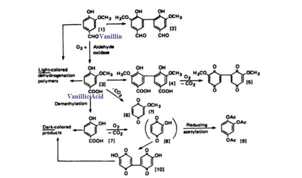 Vanillin and dark colored quinones.JPG